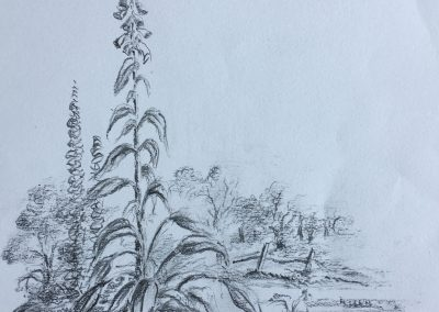 Foxglove on the Roman Road